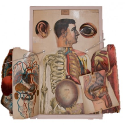 The Visual Culture of Medicine and its Objects